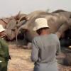 Девять слонов в Африке попали под высоковольтное напряжение