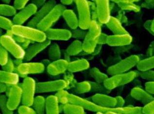 Микробы вырабатывающие электроэнергию