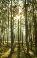 Электроэнергия из дерева