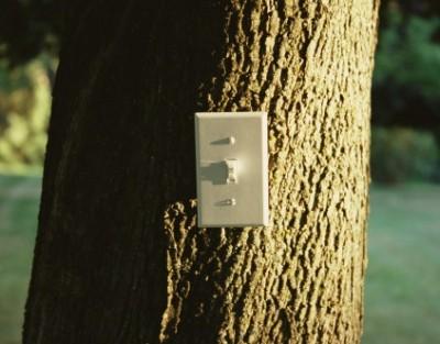 Управление освещением в лесу