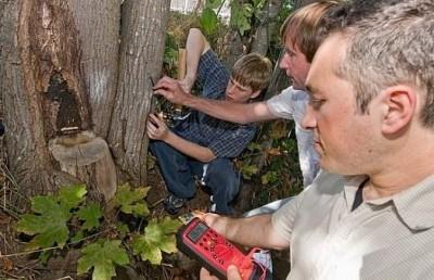 Получение электроэнергии от деревьев