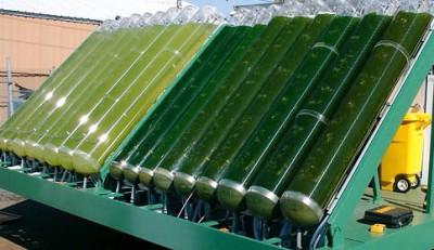 Электроэнергия из водорослей