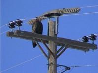 Опора линий электропередач