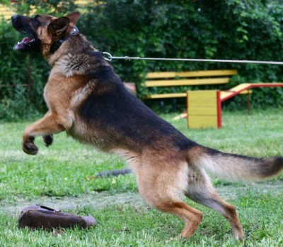Ошейник для собаки