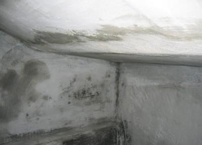 Колония грибков на потолке