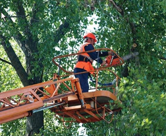 какая гос аргагизация занимается срубом сухих деревьев