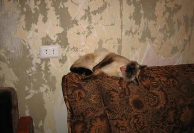 Ремонт в домах ветеранов