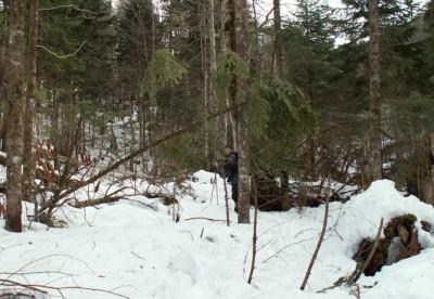 Вырубка леса вблизи линии электропередачи