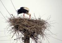 Опора ЛЭП - опасное место для гнезда