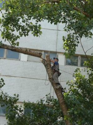 В каких случаях удаляются аварийные деревья
