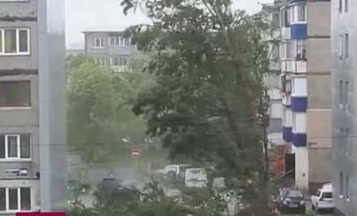 Ураган  вырвал дерево