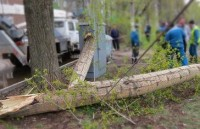 Валка дерева