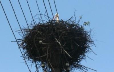 Гнездо на ЛЭП