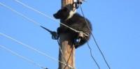Медвежонок на опоре