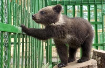 Медвежонок в вольере