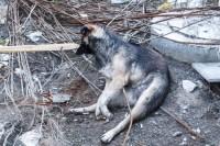 Собаку убило током
