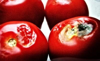 Энергия из томатов