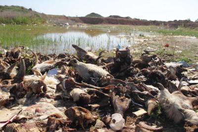 Несанкционированная утилизация биоотходов