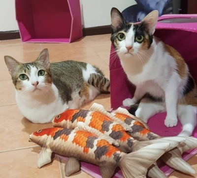 коты инвалиды
