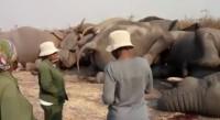 Погибли 9 слонов