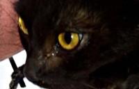 Кошка бездомная