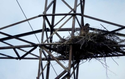 Птичье гнездо на опоре